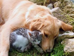 Katzen-Allergie, Hunde-Allergie, Cat and dog, best friends., Fotolia.de